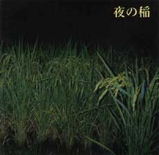 Rice_Field_Silently_Riping_In_The_Night