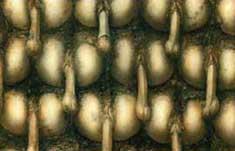 Penis_Landscape